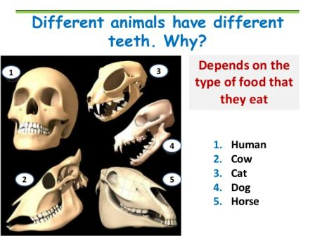 animal_teeth.jpg
